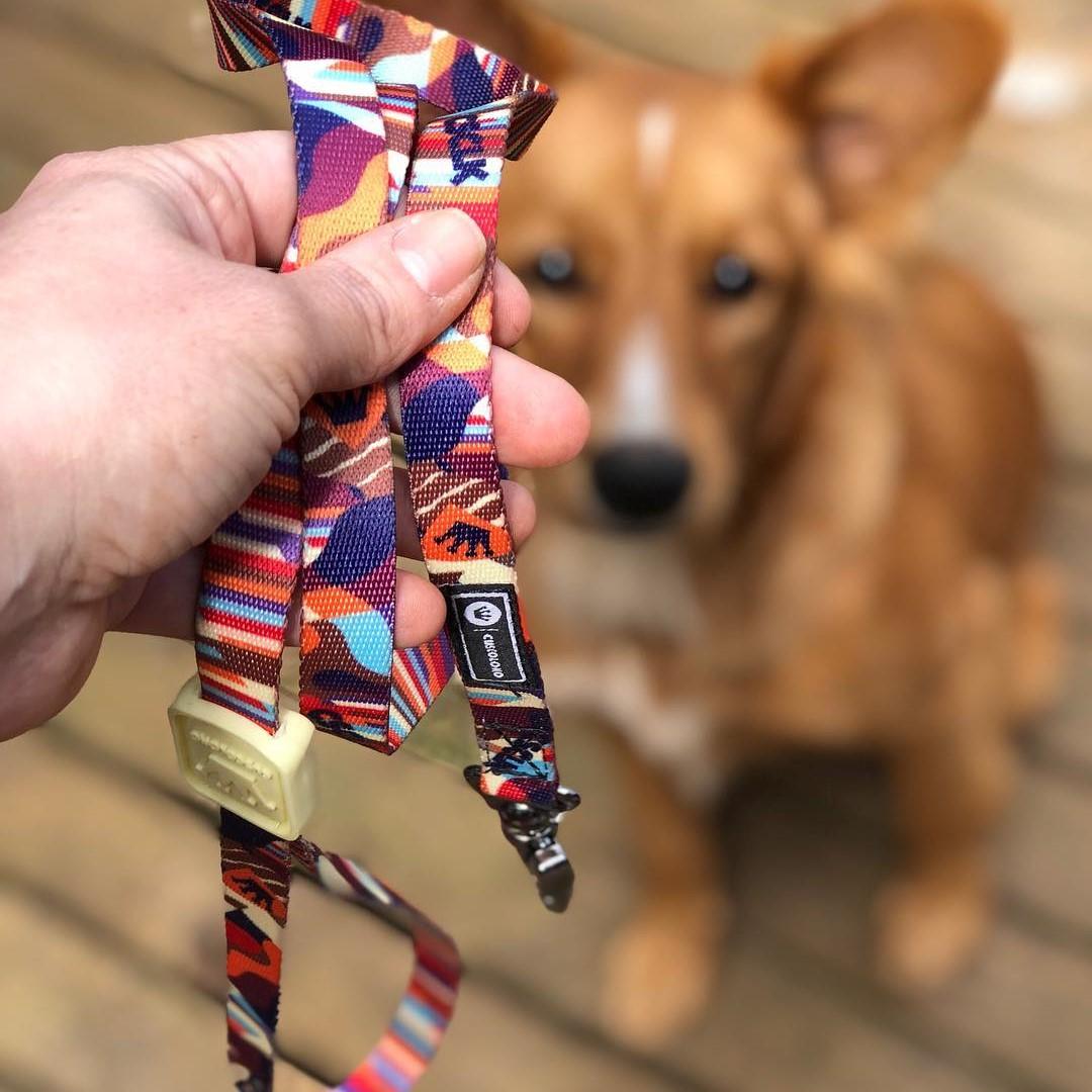Guia para Cachorros Cuscoloko Jack B. em foco com cachorro no fundo
